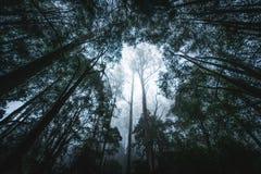 Tropikalny las deszczowy na mgłowym ranku Fotografia Stock