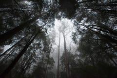 Tropikalny las deszczowy na mgłowym ranku Obrazy Stock