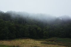 Tropikalny las deszczowy na mgłowym ranku Fotografia Royalty Free
