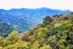Tropikalny tropikalny las deszczowy Nyungwe park narodowy, Rwanda zdjęcia royalty free