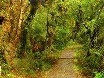 Tropikalny las deszczowy, Olimpijski park narodowy, Waszyngton fotografia royalty free