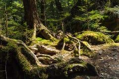 Tropikalny las deszczowy przy Routeburn śladem Fotografia Stock