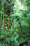 Tropikalny las deszczowy rośliny Obrazy Royalty Free