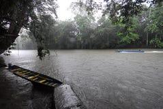 Tropikalny las deszczowy Rzeczny rejs Zdjęcie Stock
