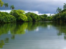 tropikalny las deszczowy rzeka Obrazy Royalty Free