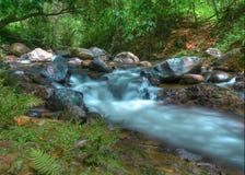 Tropikalny las deszczowy rzeka Fotografia Stock
