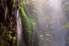 tropikalny las deszczowy siklawa Fotografia Stock