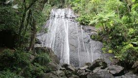 Tropikalny las deszczowy siklawa w El Yunque parku narodowym zdjęcie wideo