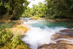 Tropikalny las deszczowy siklawy Agua Azul Fotografia Stock