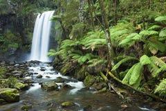 Tropikalny las deszczowy siklawy, Hopetoun Spadają, Wiktoria, Australia Fotografia Stock