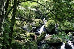 tropikalny las deszczowy strumień Obraz Royalty Free