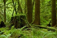 Tropikalny las deszczowy temat Zdjęcie Royalty Free