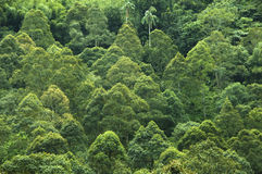 tropikalny las deszczowy tropikalny Obrazy Royalty Free