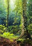 tropikalny las deszczowy tropikalny Obrazy Stock