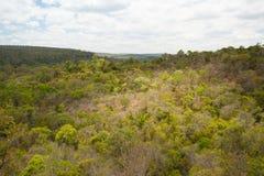 Tropikalny las deszczowy w Ankarafantsika parku, Madagascar Fotografia Royalty Free