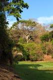 Tropikalny las deszczowy w Ankarafantsika parku, Madagascar Zdjęcie Royalty Free