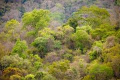 Tropikalny las deszczowy w Ankarafantsika parku, Madagascar Obrazy Royalty Free