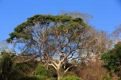Tropikalny las deszczowy w Ankarafantsika parku, Madagascar Zdjęcie Stock