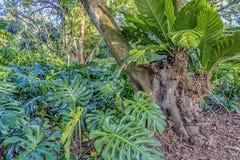Tropikalny tropikalny las deszczowy w Floryda Obrazy Stock