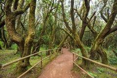 Tropikalny las deszczowy w Garajonay parku narodowym, los angeles Gomera, wyspy kanaryjska Obraz Stock