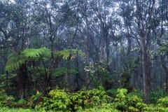 Tropikalny tropikalny las deszczowy w Hawaje Zielona roślinność na ziemi Jałowi drzewa nad Mgła w tle fotografia royalty free