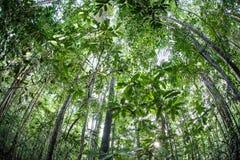 Tropikalny las deszczowy w Indonezja fotografia royalty free