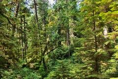 Tropikalny las deszczowy w Kolumbia Brytyjska, Kanada obraz royalty free