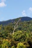 Tropikalny las deszczowy w Masoala parku narodowym, Madagascar Zdjęcie Royalty Free