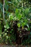 Tropikalny las deszczowy w Masoala parku narodowym, Madagascar Obrazy Stock
