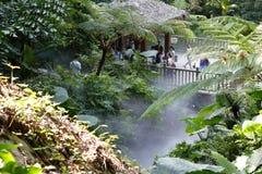 Tropikalny las deszczowy w mgle Obraz Royalty Free