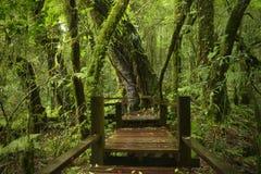 Tropikalny las deszczowy w Thailand Fotografia Stock