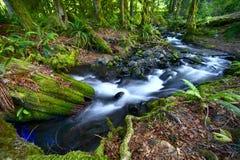 Tropikalny las deszczowy zatoczka Obrazy Royalty Free