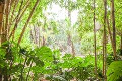 Tropikalny las, drzewka palmowe w świetle słonecznym Zdjęcie Stock