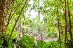 Tropikalny las, drzewka palmowe w świetle słonecznym Zdjęcie Royalty Free