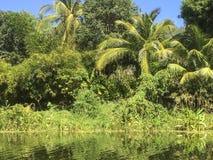 Tropikalny las przy Granada wyspami Zdjęcie Royalty Free