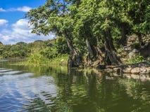 Tropikalny las przy Granada wyspami Zdjęcia Stock