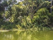 Tropikalny las przy Granada wyspami Fotografia Royalty Free
