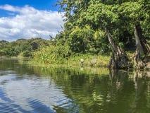 Tropikalny las przy Granada wyspami, Nikaragua Zdjęcie Royalty Free