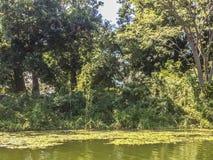Tropikalny las przy Granada wyspami, Nikaragua Zdjęcia Royalty Free