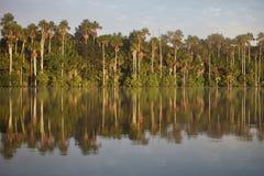 Tropikalny las tropikalny, Jeziorny Sandoval, Amazonia, Peru Zdjęcia Stock