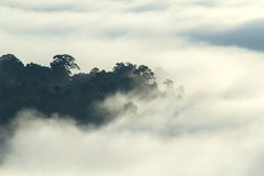 Tropikalny las w ranek doliny halnym krajobrazie nad mgłą, na punkcie widzenia Khao Kai Nui, Phang Nga, Tajlandia Obraz Stock