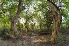 Tropikalny lasowy Keoladeo park narodowy Fotografia Stock