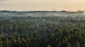 Tropikalny Lasowy zoom Timelapse 4k zbiory