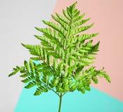 tropikalny liści, obraz stock