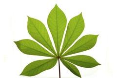 tropikalny liści, zdjęcia royalty free