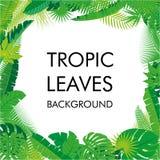 Tropikalny liścia tło, odizolowywa wektor Abstrakcjonistyczna ilustracja z differrent ulistnieniem i miejsce dla twój teksta Obrazy Stock