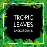 Tropikalny liścia tło, odizolowywa wektor Abstrakcjonistyczna ilustracja z differrent ulistnieniem i miejsce dla twój teksta Obraz Royalty Free