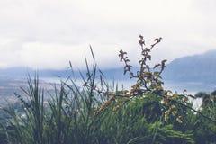 Tropikalny liścia tło outdoors bali piękny Indonesia wyspy kuta mężczyzna bieg kształta zmierzchu miasteczko widoczny góra przegl Zdjęcia Stock