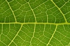 tropikalny liści, Zdjęcie Royalty Free