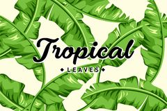 Tropikalny li?cia Bckground szablon ilustracji